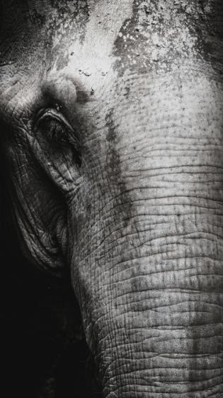 Close up elephant at One Lit Place onelitplace.com