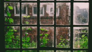black window pane with ivy on brick building for One Lit Place at onelitplace.com