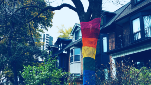 rainbow covering on oak tree in front of houses